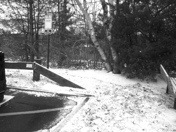 Trees Snow1