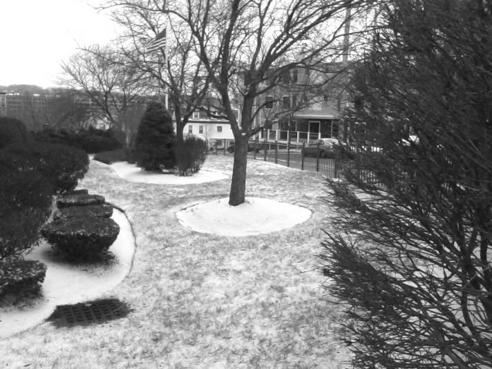 Trees Snow2