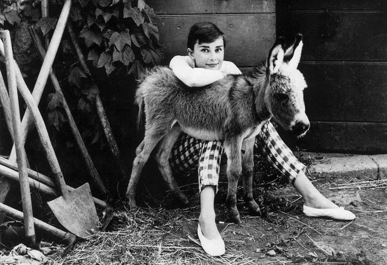 Audrey Hepburn with a donkey.