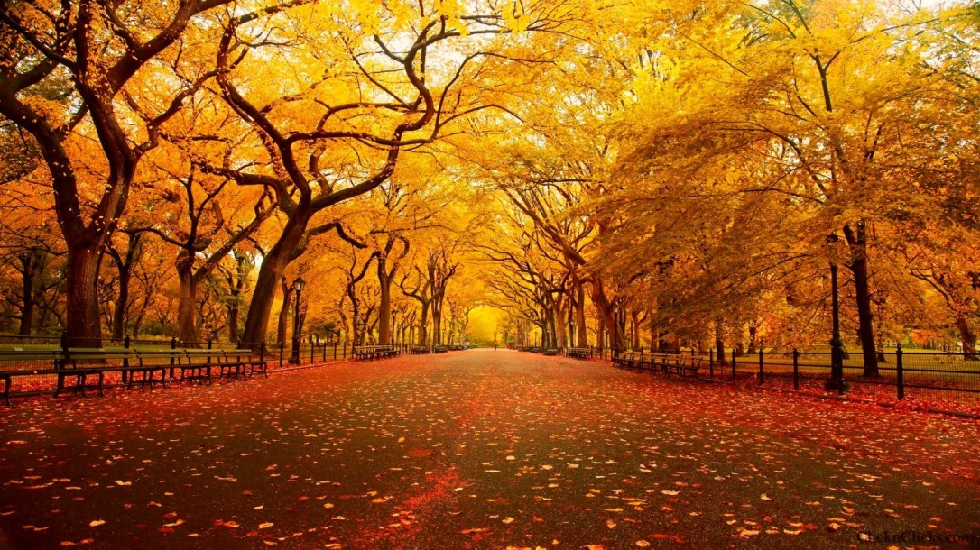 Central Park in New York City ~ Autumn