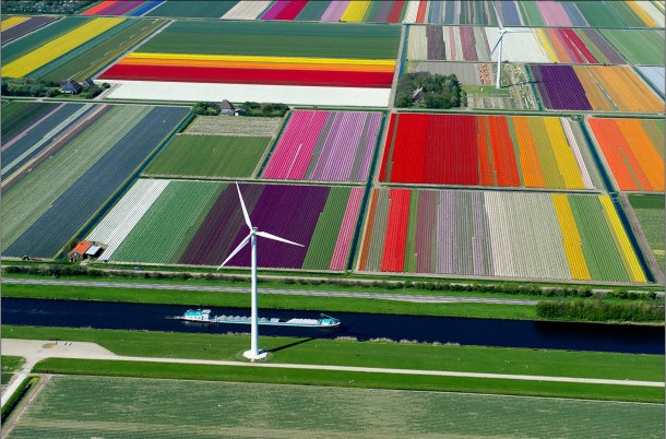 Tulip Farm is located in The Netherlands
