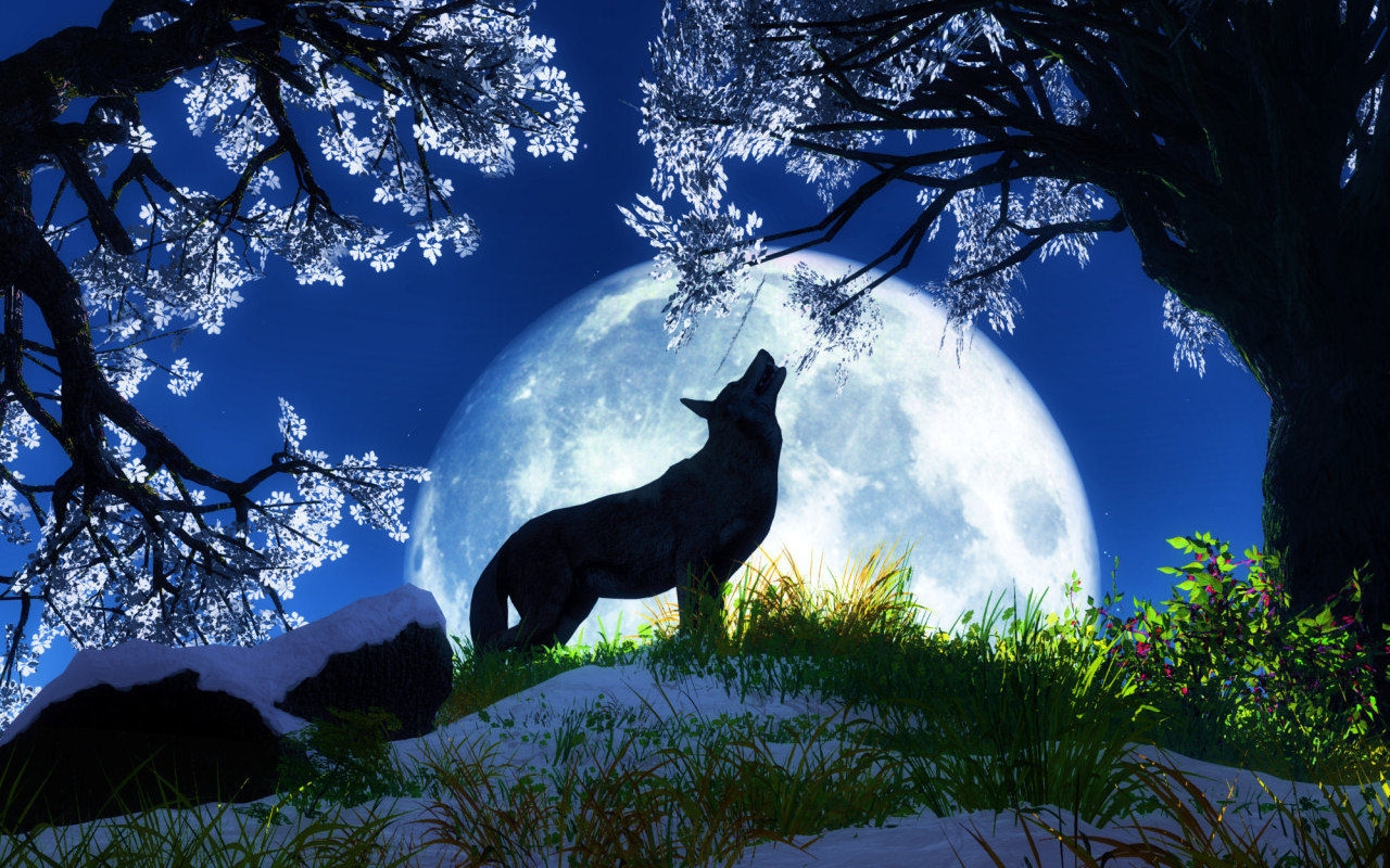Fox and full moon a pondering mind - Fox desktop background ...