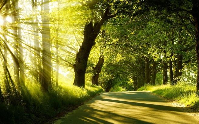 Summer forest sunshine