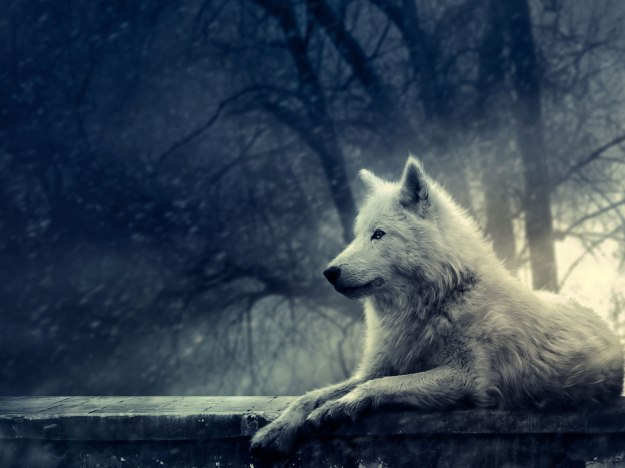 Wolf on stone wall.