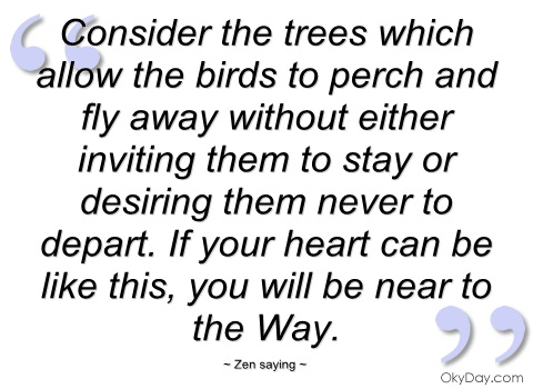 consider-the-trees-which-allow-the-birds-zen-saying