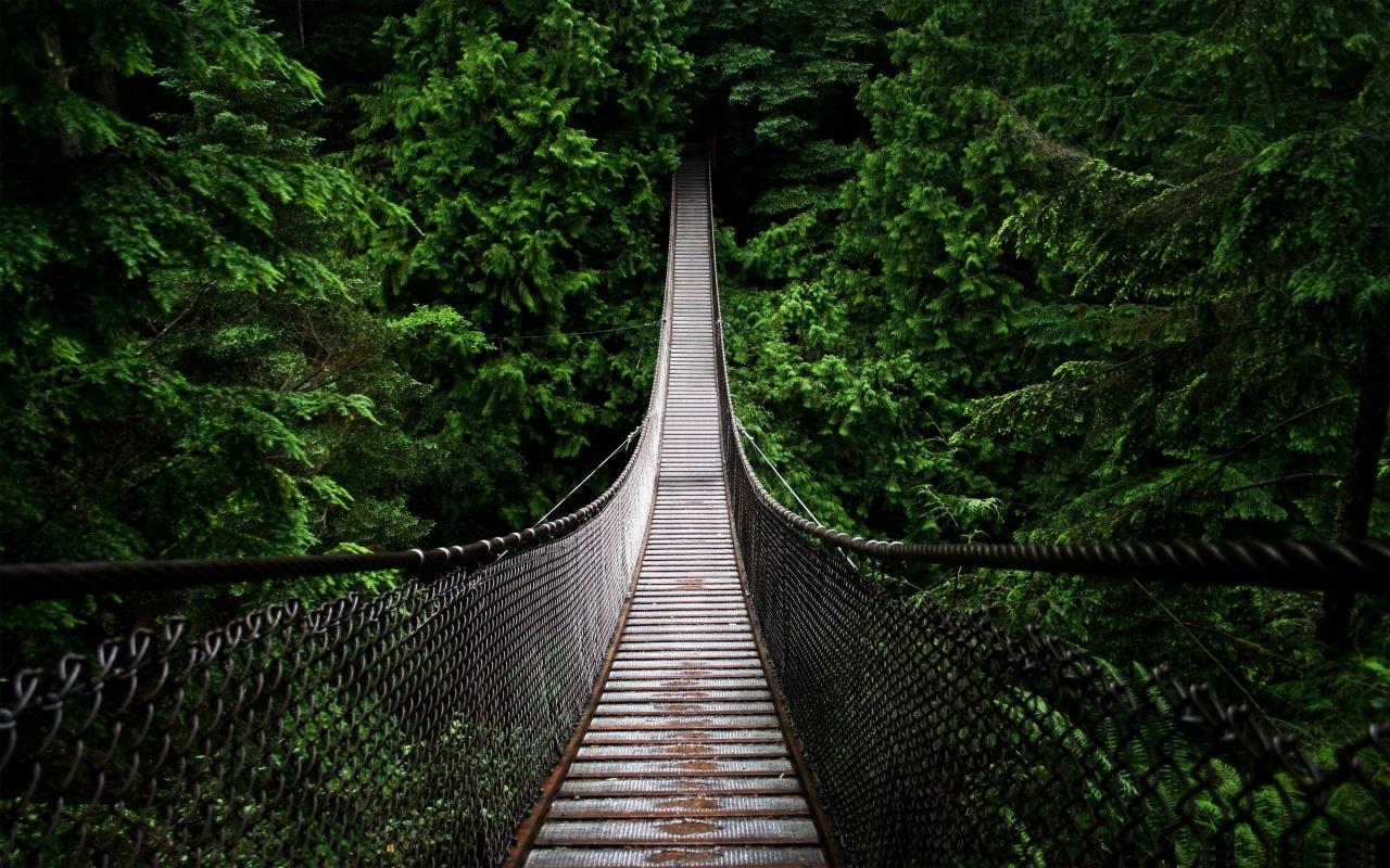 Image result for costa rica suspension bridge