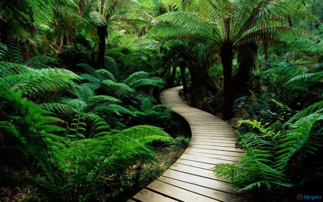 Green nature pathway