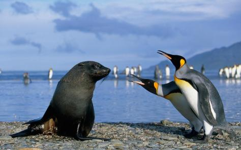 Penguins and Seal