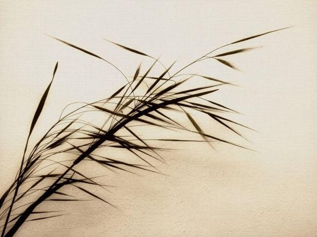 Zen Bamboo Spiritual