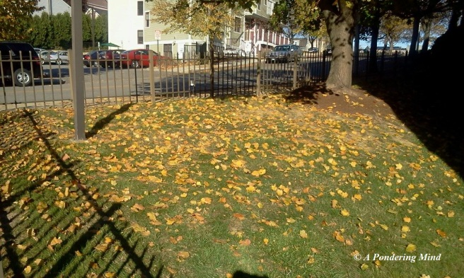 Leaves laying on the grass.