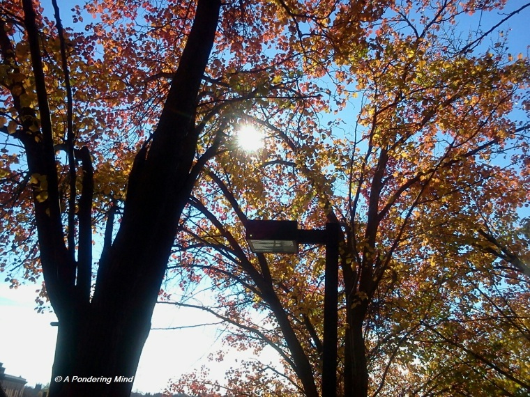 Sun light through trees. 1