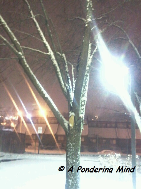 Snow December 14 2013