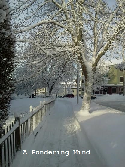 Snow February 19 2014