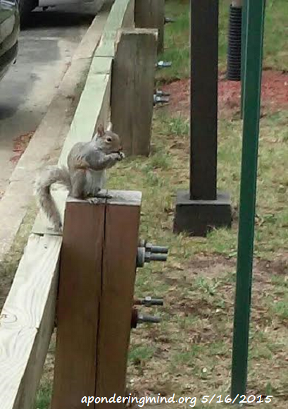 Squirrel having a snack.