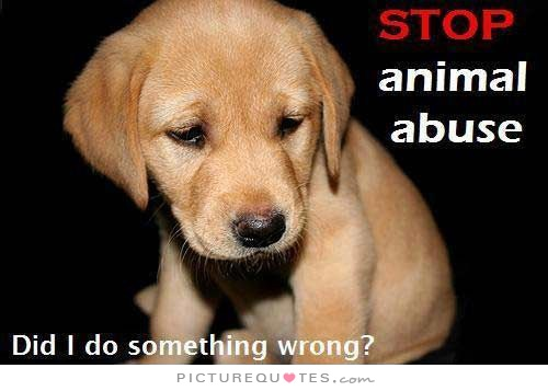 stop-animal-abuse-did-i-do-something-wrong-quote-1