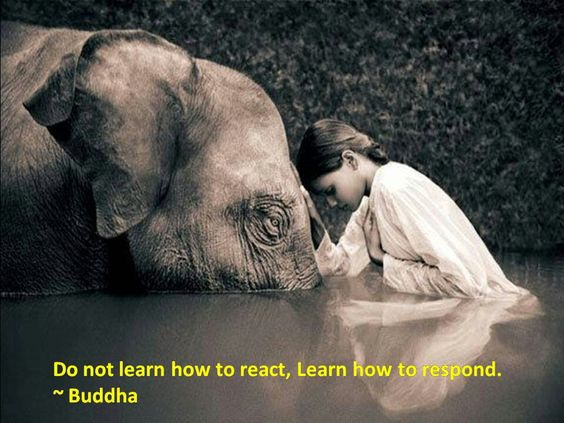 Buddha Learn How To Respond